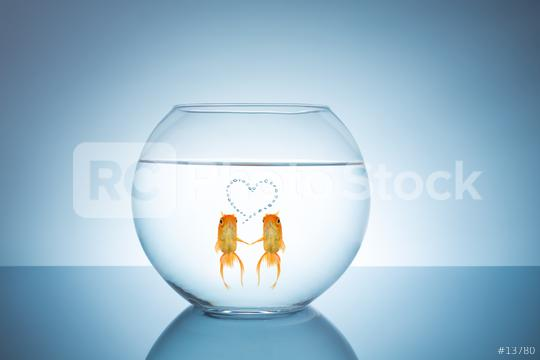 goldfish couple in love  : Stock Photo or Stock Video Download rcfotostock photos, images and assets rcfotostock | RC-Photo-Stock.: