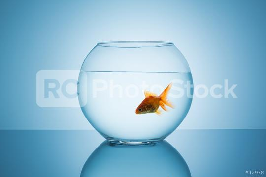 goldfish floats in a fishbowl  : Stock Photo or Stock Video Download rcfotostock photos, images and assets rcfotostock   RC-Photo-Stock.: