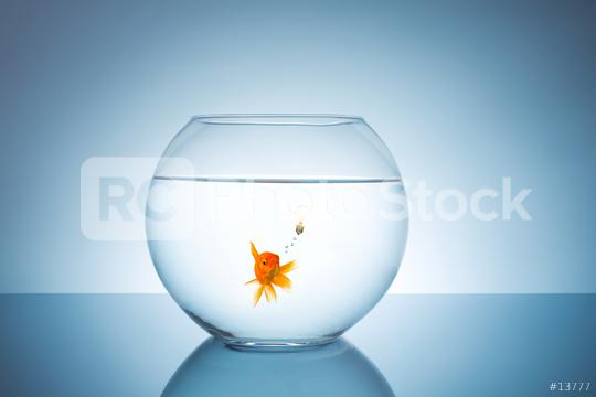goldfish has an idea  : Stock Photo or Stock Video Download rcfotostock photos, images and assets rcfotostock   RC-Photo-Stock.: