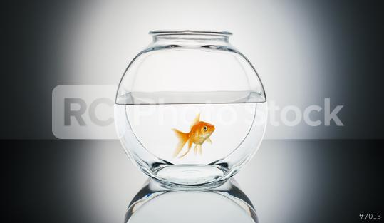 Goldfish in a fishbowl  : Stock Photo or Stock Video Download rcfotostock photos, images and assets rcfotostock   RC-Photo-Stock.: