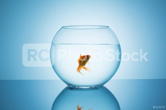 goldfish in a fishbowl glass  : Stock Photo or Stock Video Download rcfotostock photos, images and assets rcfotostock | RC-Photo-Stock.: