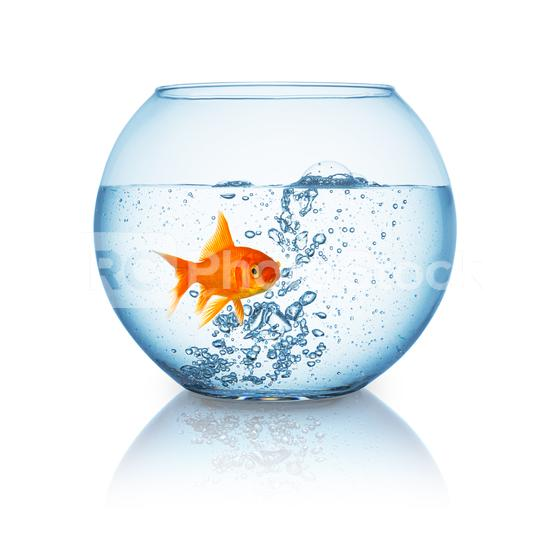 goldfish in a fishbowl with hot water  : Stock Photo or Stock Video Download rcfotostock photos, images and assets rcfotostock | RC-Photo-Stock.: