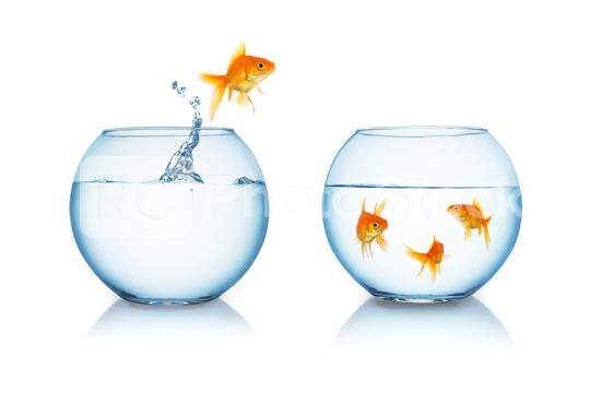 goldfish in fishbowl jumps to friends  : Stock Photo or Stock Video Download rcfotostock photos, images and assets rcfotostock | RC-Photo-Stock.: