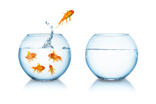Goldfish jumps in to liberty  : Stock Photo or Stock Video Download rcfotostock photos, images and assets rcfotostock | RC-Photo-Stock.: