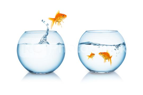 goldfish jumps to his family  : Stock Photo or Stock Video Download rcfotostock photos, images and assets rcfotostock | RC-Photo-Stock.: