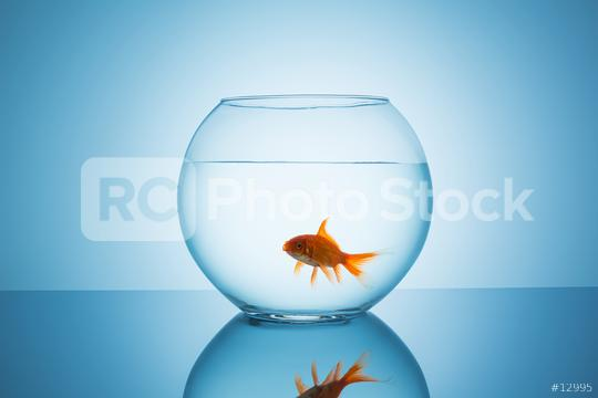 goldfish open mouth in a fishbowl  : Stock Photo or Stock Video Download rcfotostock photos, images and assets rcfotostock | RC-Photo-Stock.: