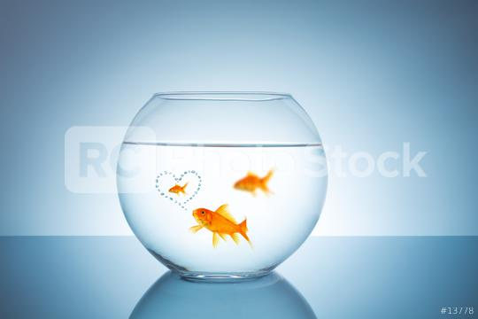 Goldfish thinks about unfaithful   : Stock Photo or Stock Video Download rcfotostock photos, images and assets rcfotostock | RC-Photo-Stock.: