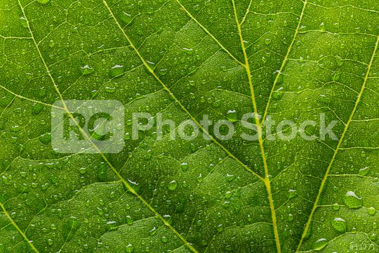 green leaf with drops  : Stock Photo or Stock Video Download rcfotostock photos, images and assets rcfotostock   RC-Photo-Stock.: