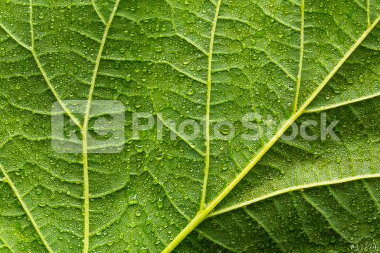 Green leaf with drops of water  : Stock Photo or Stock Video Download rcfotostock photos, images and assets rcfotostock | RC-Photo-Stock.: