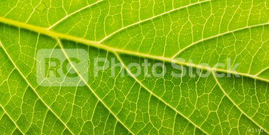 green leave detail  : Stock Photo or Stock Video Download rcfotostock photos, images and assets rcfotostock   RC-Photo-Stock.: