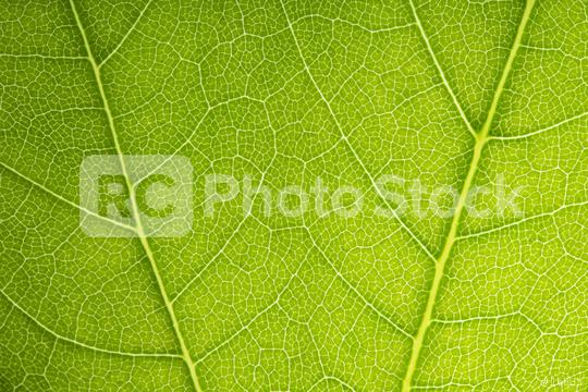 green leaves shaping on a beautiful background  : Stock Photo or Stock Video Download rcfotostock photos, images and assets rcfotostock | RC-Photo-Stock.: