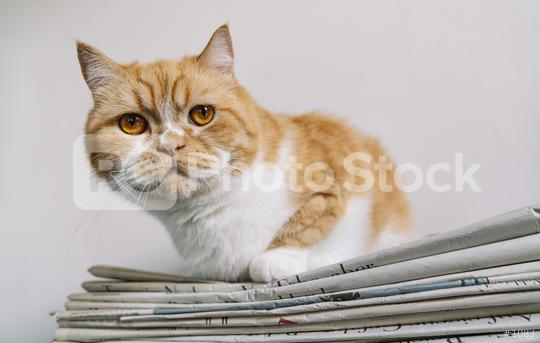 grumpy cat sits on a newspaper stack  : Stock Photo or Stock Video Download rcfotostock photos, images and assets rcfotostock   RC-Photo-Stock.:
