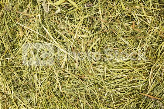 hay background texture pattern  : Stock Photo or Stock Video Download rcfotostock photos, images and assets rcfotostock | RC-Photo-Stock.: