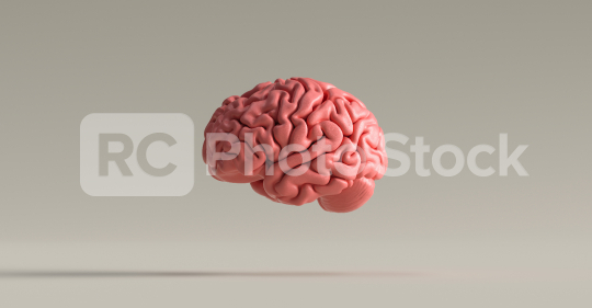 Human brain against, concept image for feminism and woman rights  : Stock Photo or Stock Video Download rcfotostock photos, images and assets rcfotostock | RC-Photo-Stock.: