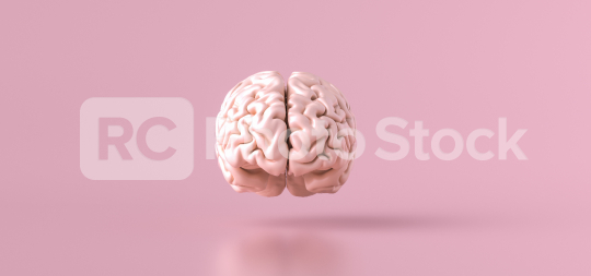 Human brain Anatomical Model, front view  : Stock Photo or Stock Video Download rcfotostock photos, images and assets rcfotostock | RC-Photo-Stock.: