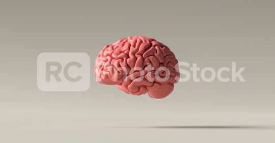 Human brain Anatomical Model on floor  : Stock Photo or Stock Video Download rcfotostock photos, images and assets rcfotostock   RC-Photo-Stock.: