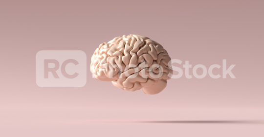 human brain Anatomical Model on floor  : Stock Photo or Stock Video Download rcfotostock photos, images and assets rcfotostock | RC-Photo-Stock.: