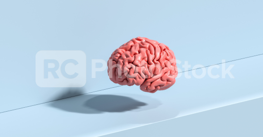 Human brain Anatomical Model on ground  : Stock Photo or Stock Video Download rcfotostock photos, images and assets rcfotostock | RC-Photo-Stock.: