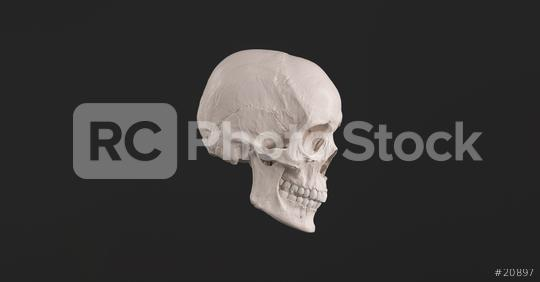 Human Skull and Jaw Bone side view Pirate Poison Horror Symbol Halloween Medical. Anatomy and medicine concept image.  : Stock Photo or Stock Video Download rcfotostock photos, images and assets rcfotostock   RC-Photo-Stock.: