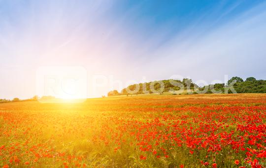 Landscape with nice sunset over poppy field  : Stock Photo or Stock Video Download rcfotostock photos, images and assets rcfotostock | RC-Photo-Stock.: