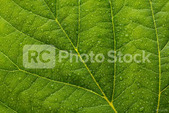 leaf with dew drops background   : Stock Photo or Stock Video Download rcfotostock photos, images and assets rcfotostock   RC-Photo-Stock.: