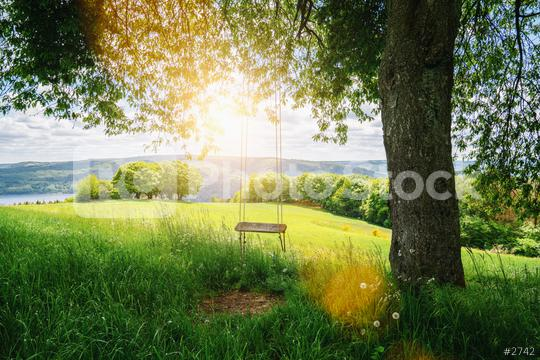 Old wooden vintage swing hanging from a large tree on green grass background, in golden evening sunlight  : Stock Photo or Stock Video Download rcfotostock photos, images and assets rcfotostock   RC-Photo-Stock.:
