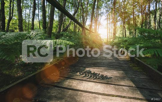 path in to the forest covered ferns and sunlight, at summer evening   : Stock Photo or Stock Video Download rcfotostock photos, images and assets rcfotostock   RC-Photo-Stock.: