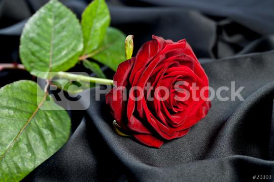 red rose on a background of black satin silk  : Stock Photo or Stock Video Download rcfotostock photos, images and assets rcfotostock | RC-Photo-Stock.: