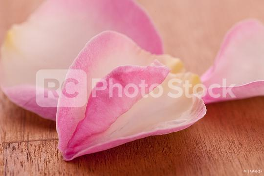 Rose leafs on wooden background  : Stock Photo or Stock Video Download rcfotostock photos, images and assets rcfotostock | RC-Photo-Stock.: