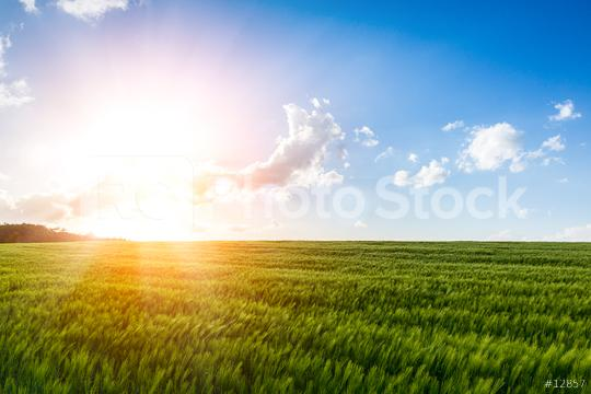 Scene of sunset or sunrise on the field with young rye or wheat in the summer with a cloudy sky background. Landscape.  : Stock Photo or Stock Video Download rcfotostock photos, images and assets rcfotostock | RC-Photo-Stock.: