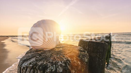 Shell on a sandy beach at sunset  : Stock Photo or Stock Video Download rcfotostock photos, images and assets rcfotostock | RC-Photo-Stock.: