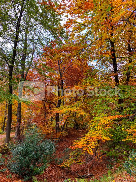 Silent Forest in spring with beautiful bright sun rays - wanderlust  : Stock Photo or Stock Video Download rcfotostock photos, images and assets rcfotostock   RC-Photo-Stock.: