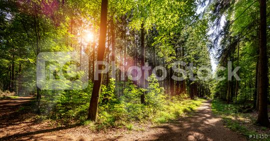 Silent Forest in spring with beautiful bright sun rays  : Stock Photo or Stock Video Download rcfotostock photos, images and assets rcfotostock   RC-Photo-Stock.: