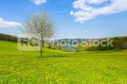 Sping in the eifel landscape in germany  : Stock Photo or Stock Video Download rcfotostock photos, images and assets rcfotostock | RC-Photo-Stock.: