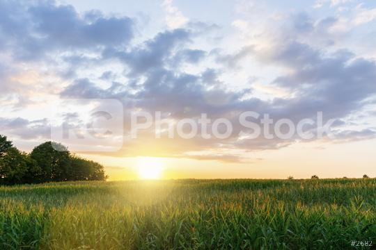 Summer landscape - wheat field at sunset  : Stock Photo or Stock Video Download rcfotostock photos, images and assets rcfotostock   RC-Photo-Stock.: