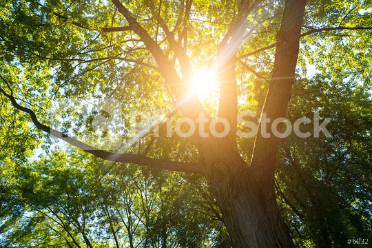 Sun shines explosive in to forest treetops  : Stock Photo or Stock Video Download rcfotostock photos, images and assets rcfotostock | RC-Photo-Stock.: