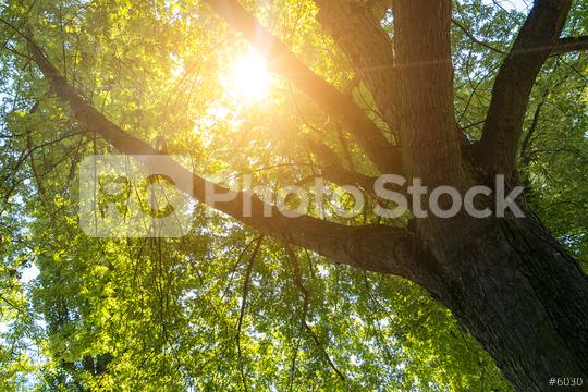 Sun shining between a treetop  : Stock Photo or Stock Video Download rcfotostock photos, images and assets rcfotostock | RC-Photo-Stock.: