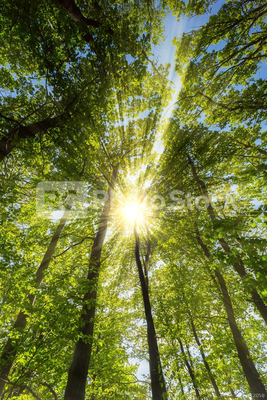 sun shining warmly through a forest in springtime  : Stock Photo or Stock Video Download rcfotostock photos, images and assets rcfotostock   RC-Photo-Stock.: