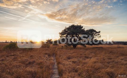 Sunset in the high Venn - Nature Park Eifel in germany  : Stock Photo or Stock Video Download rcfotostock photos, images and assets rcfotostock | RC-Photo-Stock.: