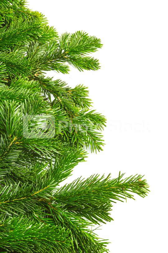 tight fir branches in a row  : Stock Photo or Stock Video Download rcfotostock photos, images and assets rcfotostock | RC-Photo-Stock.: