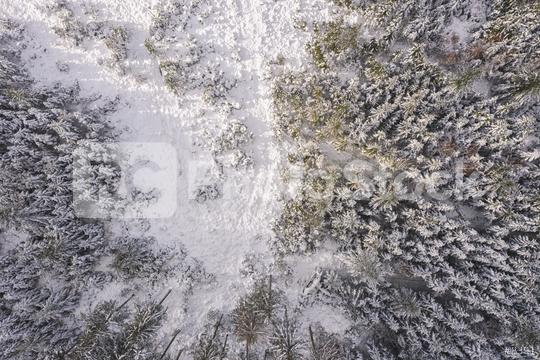 Top view of winter forest with sunlight. Drone Shot  : Stock Photo or Stock Video Download rcfotostock photos, images and assets rcfotostock | RC-Photo-Stock.: