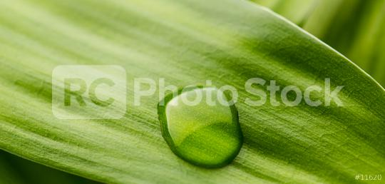 waterdrop on a leaf  : Stock Photo or Stock Video Download rcfotostock photos, images and assets rcfotostock   RC-Photo-Stock.: