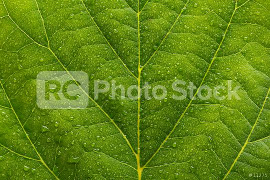 waterdrops on a green leaf  : Stock Photo or Stock Video Download rcfotostock photos, images and assets rcfotostock | RC-Photo-Stock.: