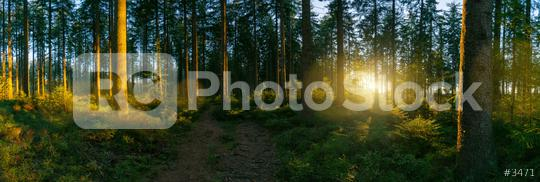 way in to the Forest panorama with sunsetlight  : Stock Photo or Stock Video Download rcfotostock photos, images and assets rcfotostock | RC-Photo-Stock.: