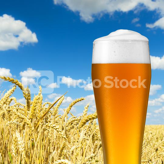 wheat beer with dew drops  : Stock Photo or Stock Video Download rcfotostock photos, images and assets rcfotostock | RC-Photo-Stock.: