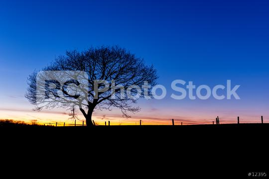 winter sunset with a oak tree silhouette  : Stock Photo or Stock Video Download rcfotostock photos, images and assets rcfotostock   RC-Photo-Stock.: