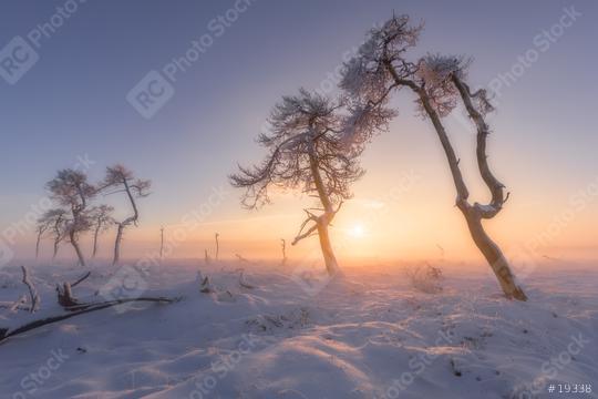 Winterliche Bäume im Schnee bei Sonnenaufgang, Hohes Venn, Eifel, Belgien  : Stock Photo or Stock Video Download rcfotostock photos, images and assets rcfotostock   RC-Photo-Stock.: