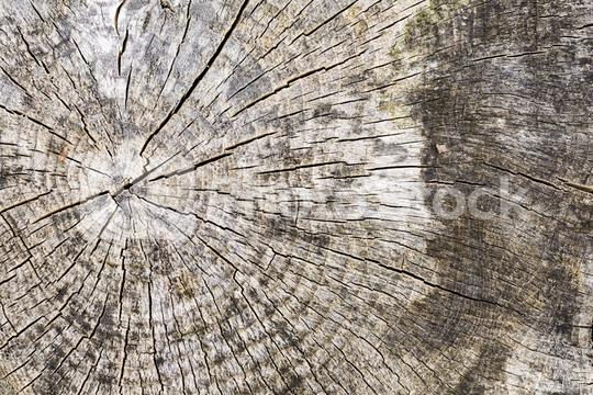 Wood tree texture pattern with year rings  : Stock Photo or Stock Video Download rcfotostock photos, images and assets rcfotostock | RC-Photo-Stock.: