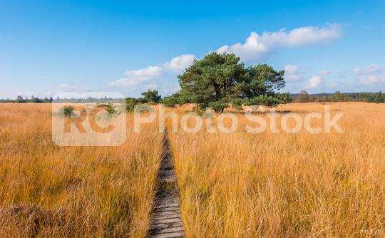 wooden trail to a bog pine at the High Fens a bog landscape at autumn, Belgium, Hohes Venn  : Stock Photo or Stock Video Download rcfotostock photos, images and assets rcfotostock | RC-Photo-Stock.: