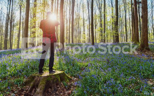 Young Man standing alone on a tree trunk at the beech forest with bluebells  : Stock Photo or Stock Video Download rcfotostock photos, images and assets rcfotostock | RC-Photo-Stock.: